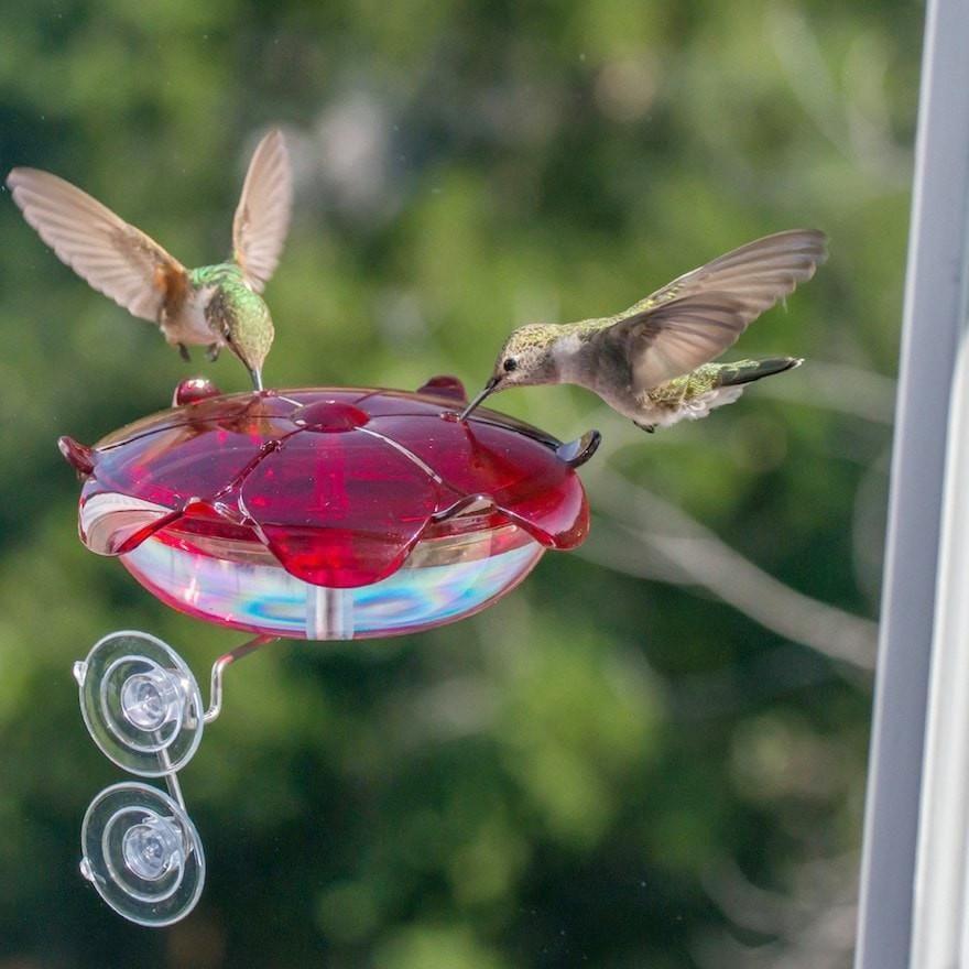Window Mount Hummingbird Feeder Humming bird feeders