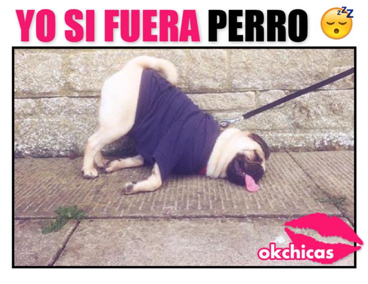 20 Divertidos Memes De Perros Que Te Haran Llorar De Risa Memes Perros Llorando De Risa Pugs Divertidos