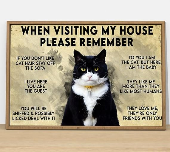 BUY 1 GET 1 FREE Cat Visiting my house remember Poster - Love cat poster, love cats poster, Poster Art, Signs for Home, Wall Decoration//1n2