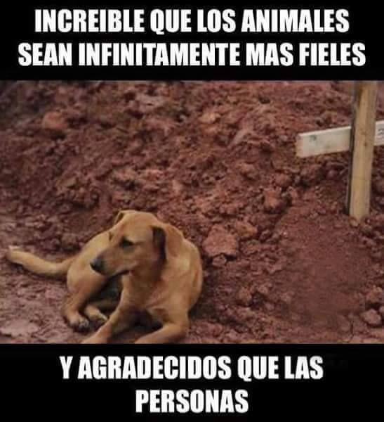 JUANA MACEDO  Facundo Cabral  Biblia  Viajes  Reflexiones: Increíble que los animales sean infinitamente más ...