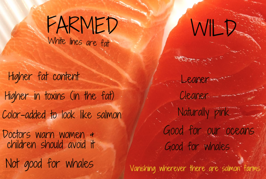 Farmed Salmon Is Full Of Antibiotics And Mercury Here S How To Tell If Your Salmon Is Safe Fitness And Power Salmon Farming Food Nutrition Recipes