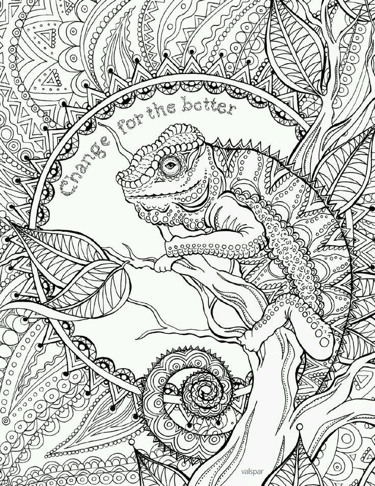 Michelle Shen 10 Photos Vk Animal Coloring Pages Coloring Books Coloring Pages