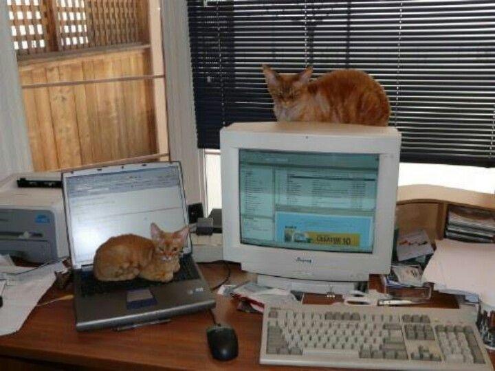 Hi tech kitties