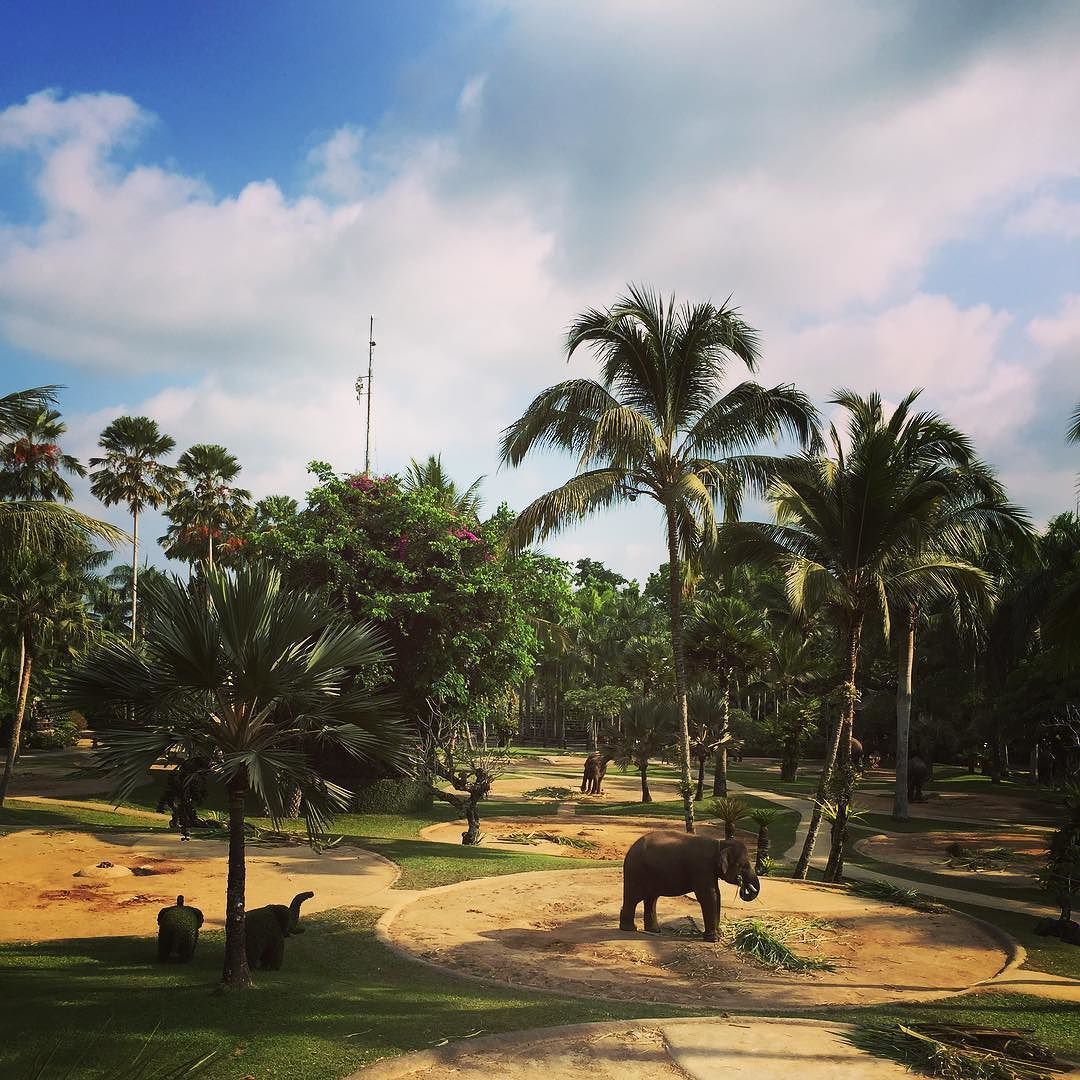 "elephantsbali: ""Lunchtime  The park now has a herd of 31 Sumatran elephants. 4 of which were born here! #elephant #paradise"""