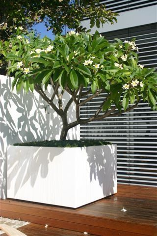 Gros Pot Blanc Sur Le Mur Large Outdoor