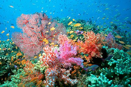 CORAL REEFS By Mote Marine Laboratory SeaTrekTV Why Are Coral Reefs Important Discover The Value Of To Wildlife And How They