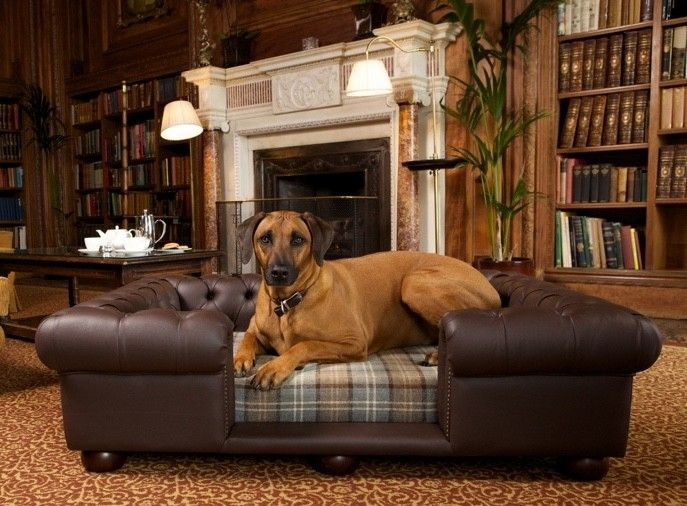 Scott S Of London Balmoral Dog Chesterfield Chocolate Brown Faux Leather With Scott S Dove Fabric Dog Friendly Hotels Dog Bed Luxury Luxury Dog