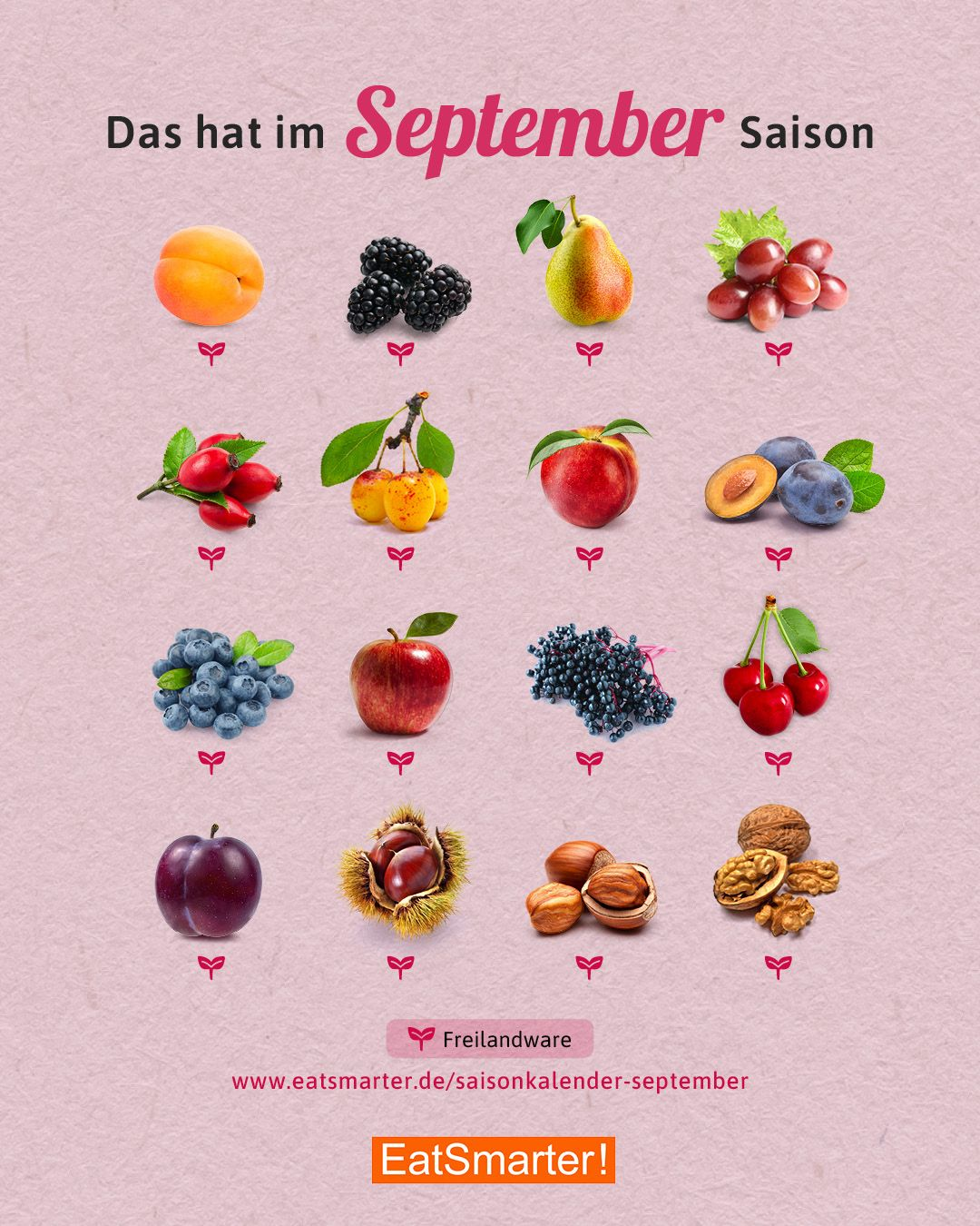 Photo of Seasonal calendar September: fruit