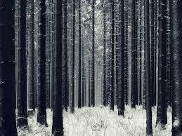 woods - Pesquisa do Google