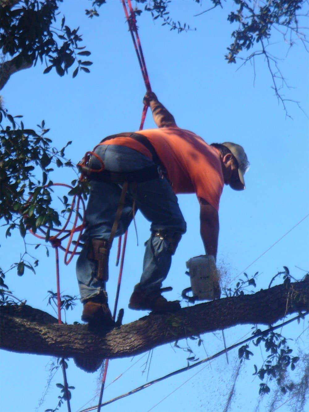 Joes tree service 1 photos 0 reviews services