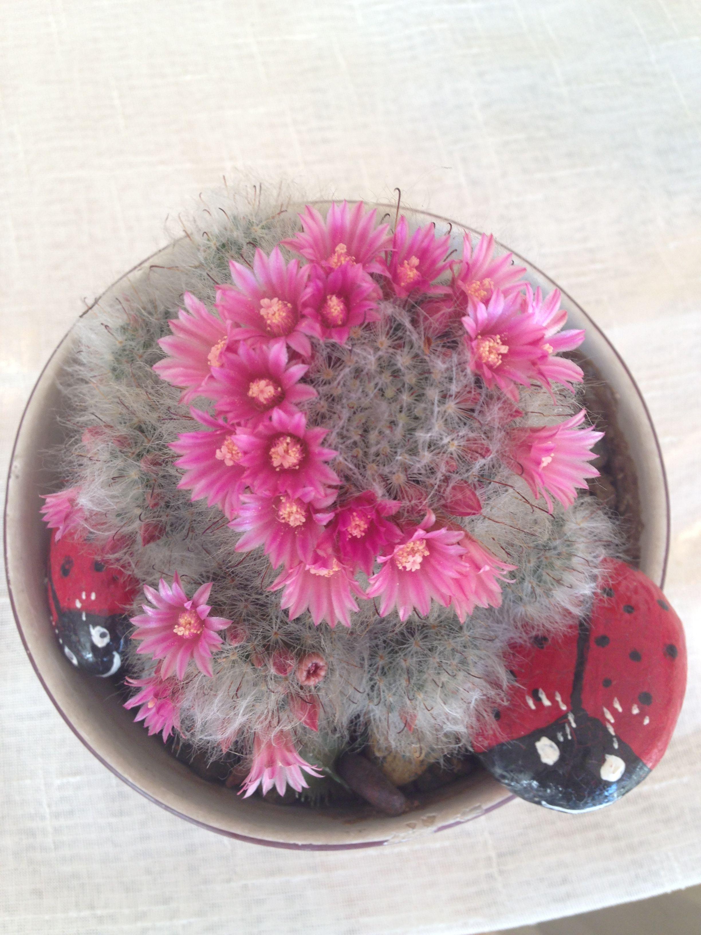 Cactus!🍀