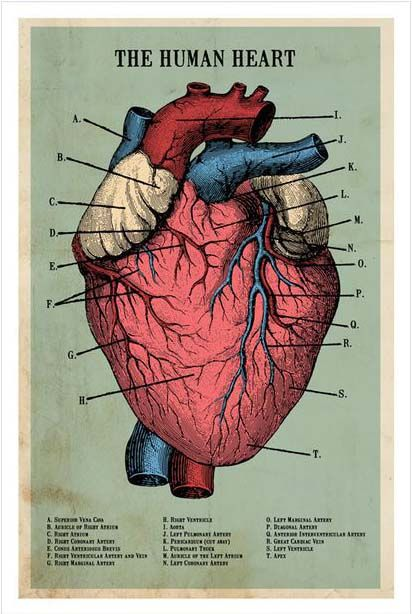 Skip A Beat Art Print | dotandbo.com | Art | Pinterest | Anatomía ...