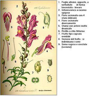 2010 Illustrazione Botanica Disegni Botanici Arte Con Uccelli