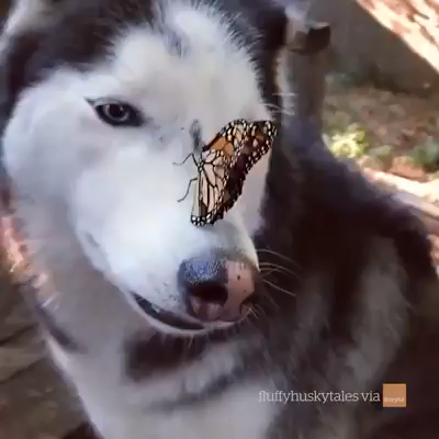And Now A Dog And Butterfly #animalsandpets