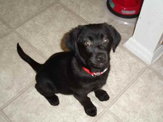 Spanador Puppy Perfect Future Addition To The Family Spanador