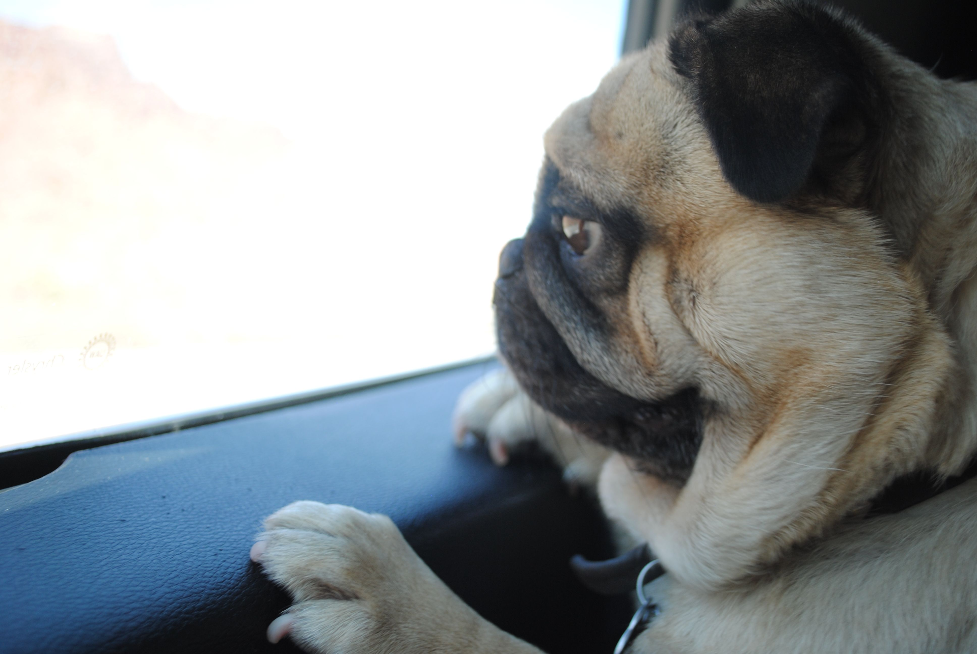 Goodbye Utah Puglove Animals Dogs Utah