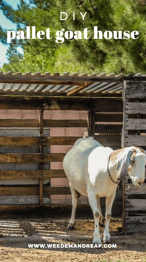 DIY: Make a Free Goat House from PALLETS | Goat house ...