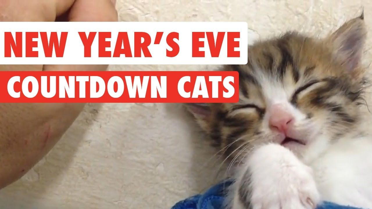 New Year s Eve Countdown Cats Video pilation 2016