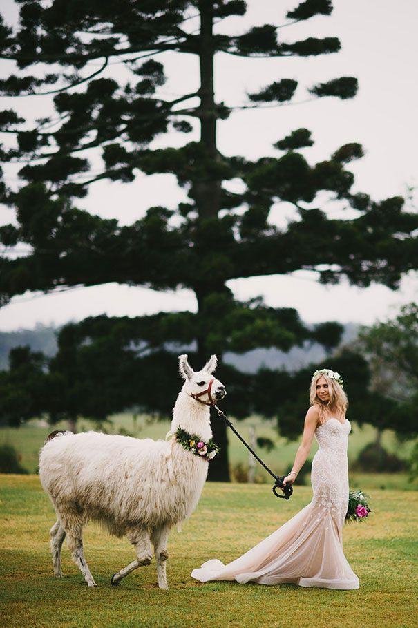 Penny Chris Wedding Pets Beautiful Beach Wedding Wedding Tips