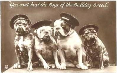 You Can T Beat The Boys Of The Bulldog Breed Best Friends Pets