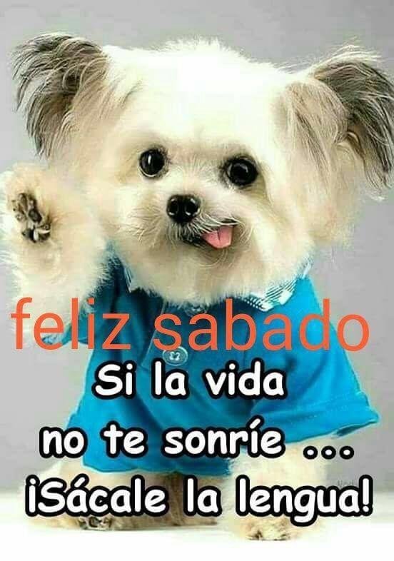 Feliz Sabado Con Imagenes Buenos Dias Con Gatos Frases