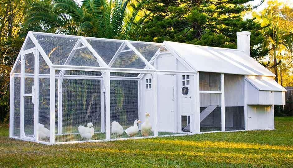 The Mansion Coop Run Chickens Chickens Backyard Walk
