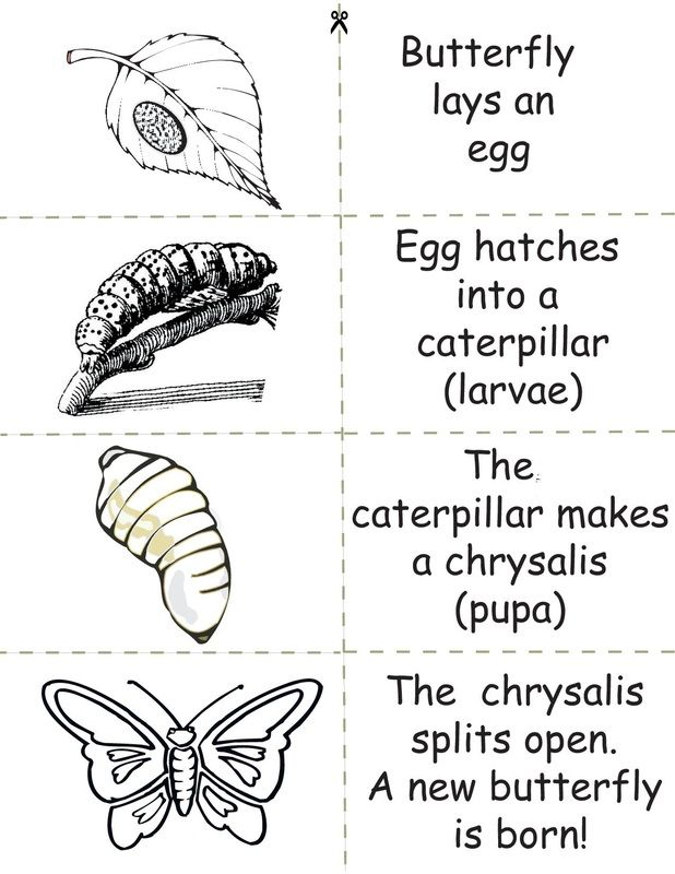 Butterfly life cycle | Language | Pinterest | Ciencias de la vida ...