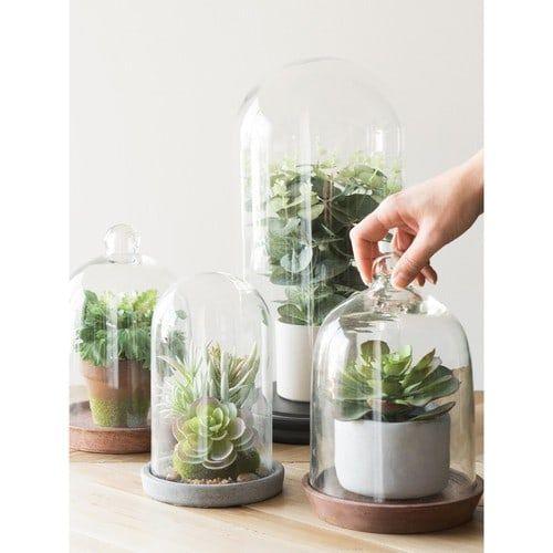 Indoor Plant, Pflanzen, Glasglocke ÉGLANTINE, H 40 Cm