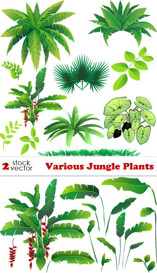 vectors various jungle plants 2 ai tiff preview 13 mb vbs rh pinterest com vector plants free download vector planet