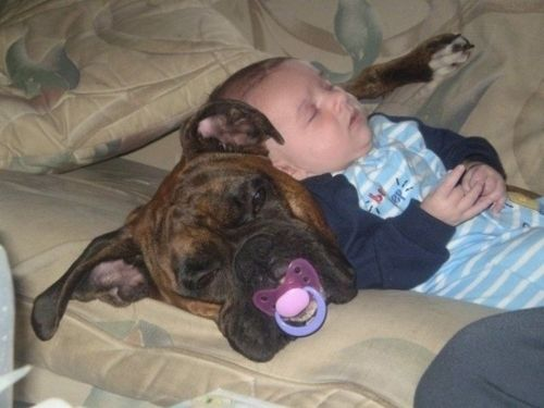 The Boxer is my Best Friend funny ANY dog breed Baby Bib