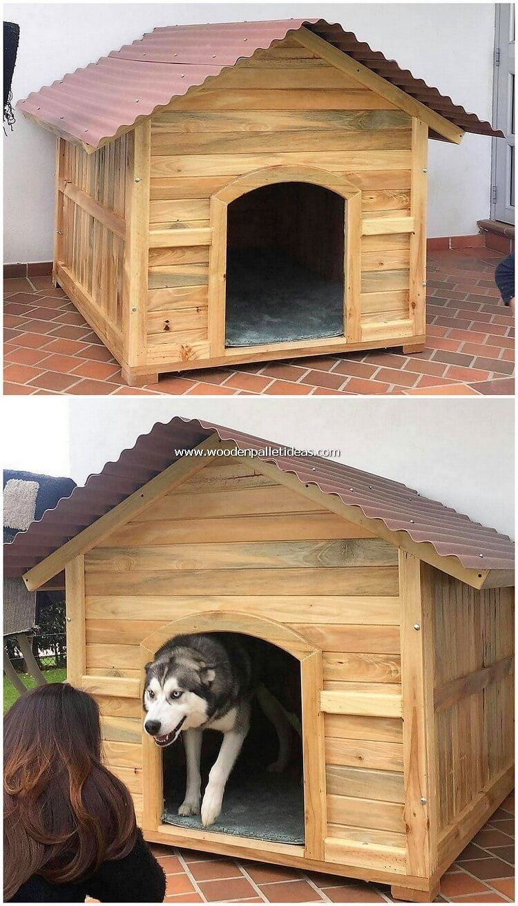 This Image Is Showing You Out With The Built In Last Pallet Dog