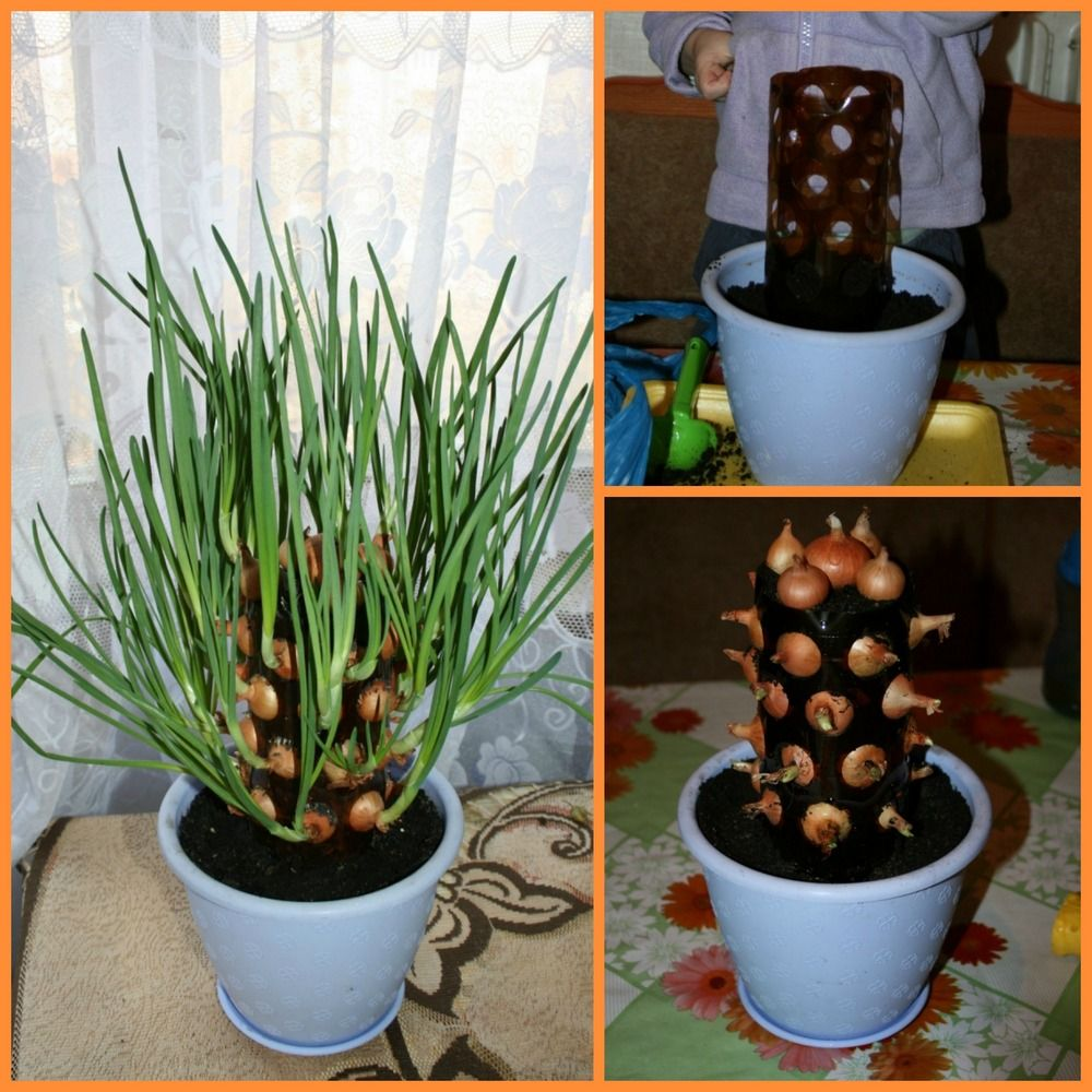 Interior designs medium size vertically growing onions growing onions - Growing Onions Can Be Fun And Easy With This Vertical Onion Planter And It S Made