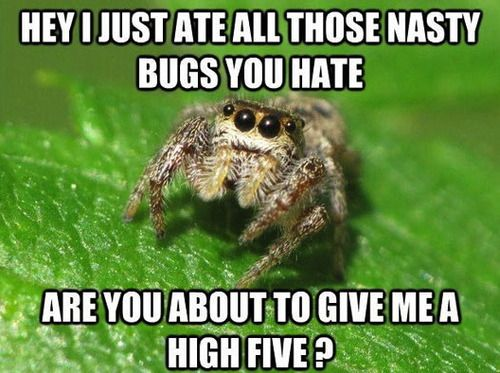 Someone In Second Life Just Shared This With Me Spiders Funny
