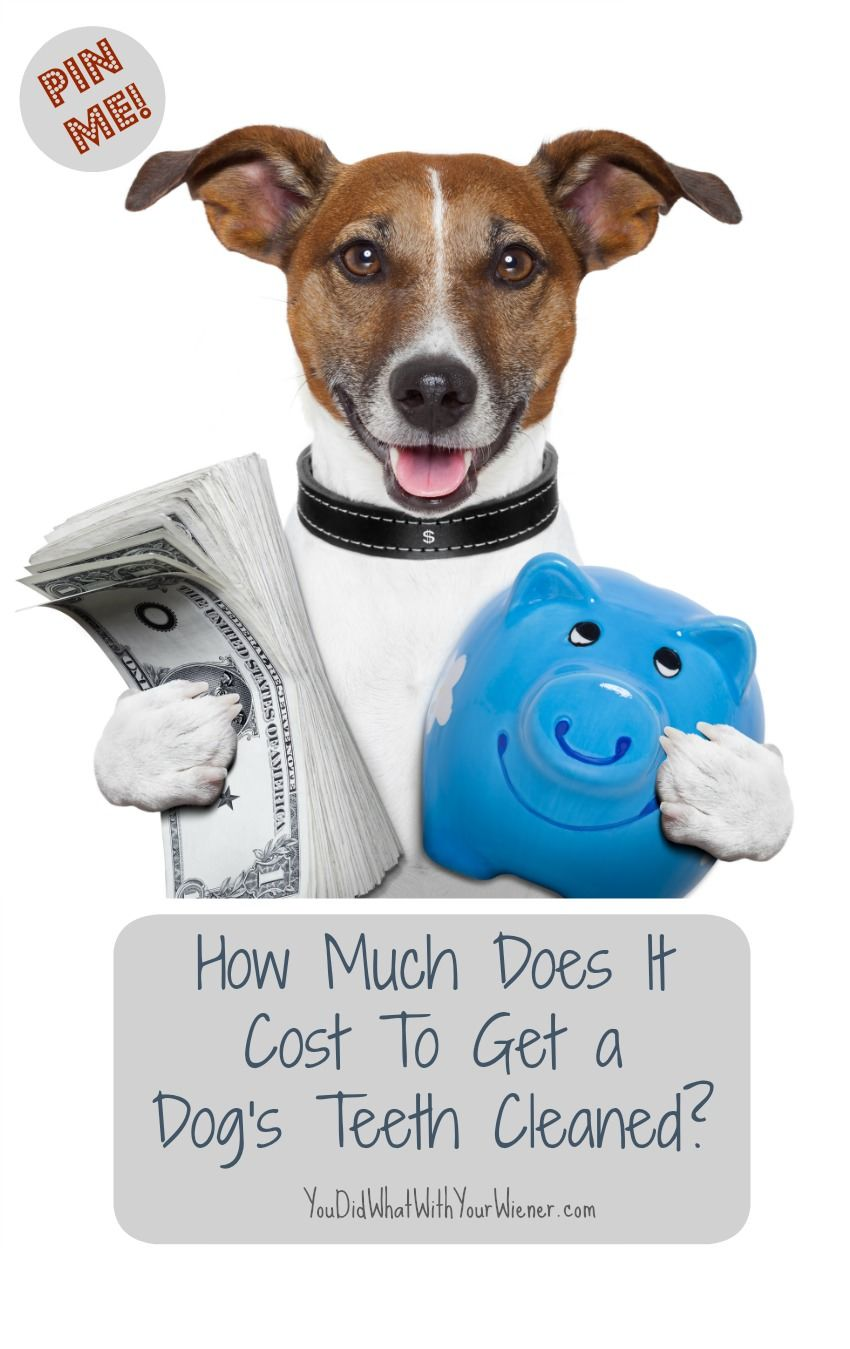 How much does it cost to get a dogs teeth cleaned dog