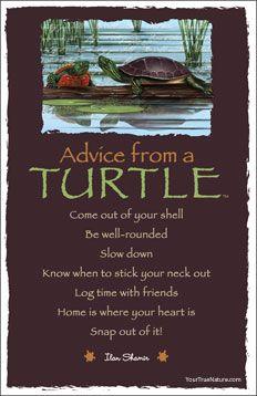 Consejo de una tortuga