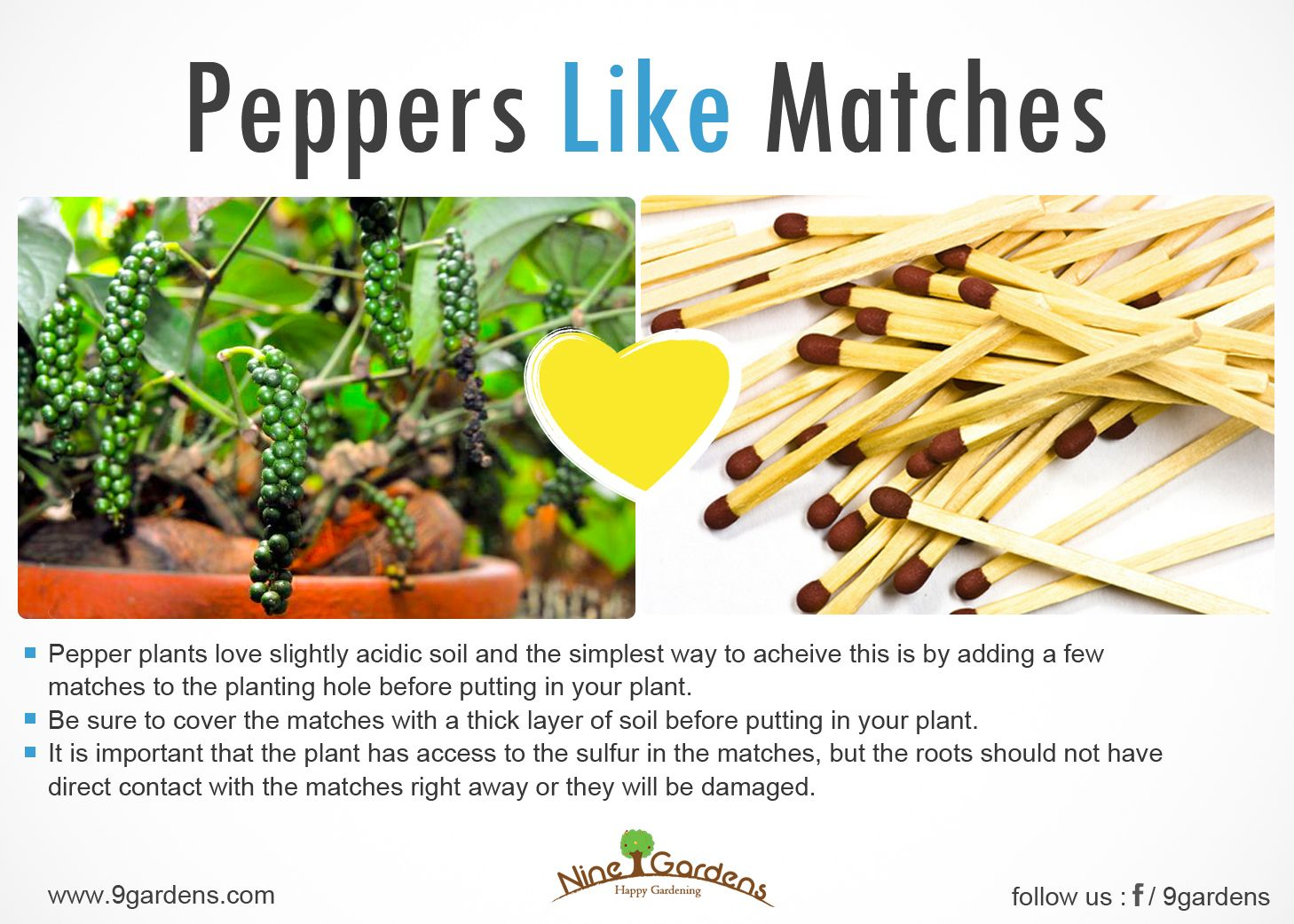 Peppers Need More Potasium Check Out Interesting Way To 400 x 300