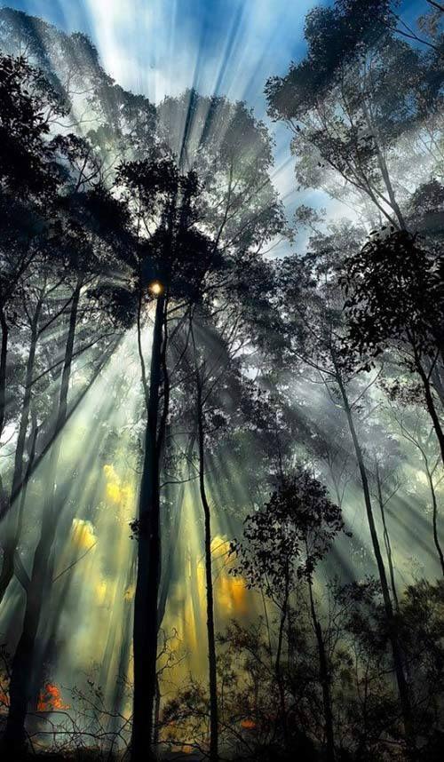 Light from heaven shining through trees!