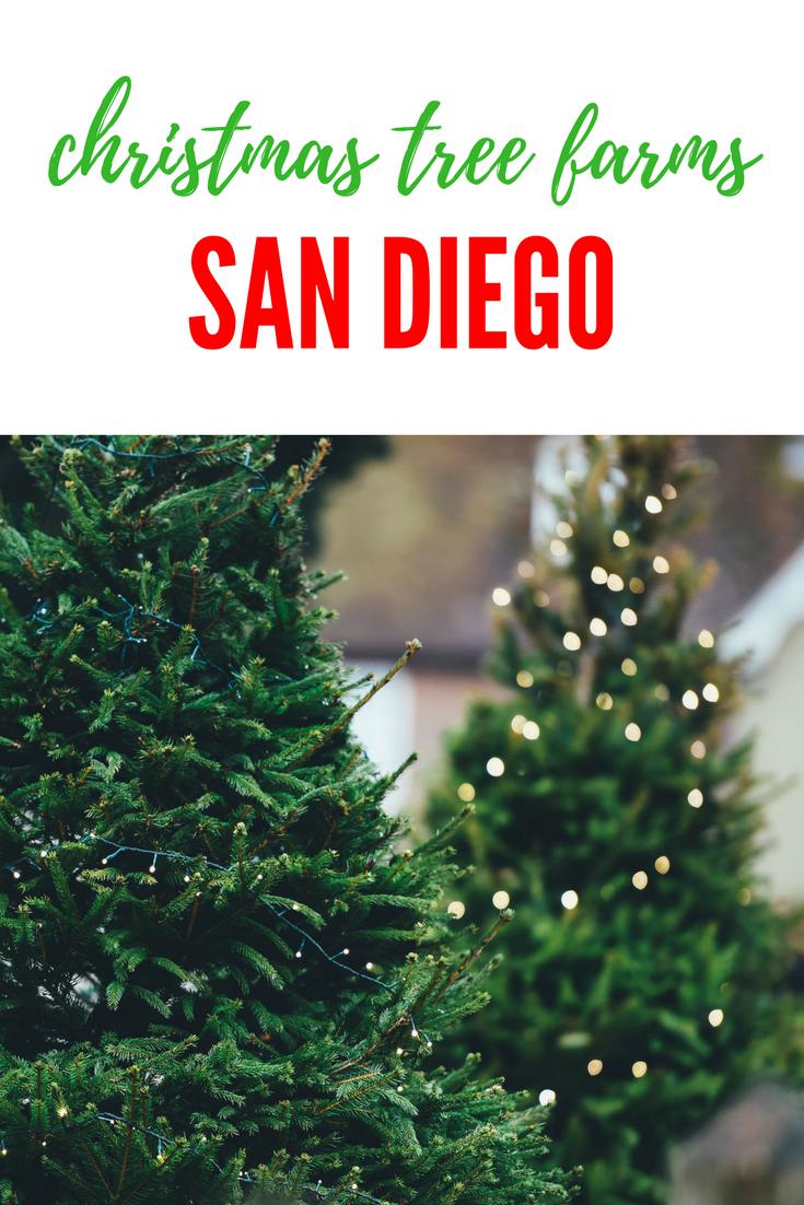 Fresh Cut Christmas Trees Near Me.Choose And Cut Christmas Tree Farms In San Diego Ca Los