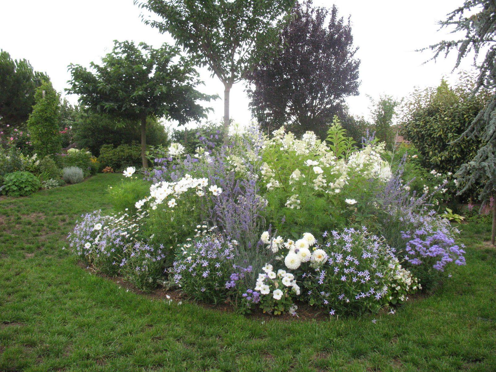 Roses du jardin Chêneland: Création d\'un massif en bleu et blanc ...