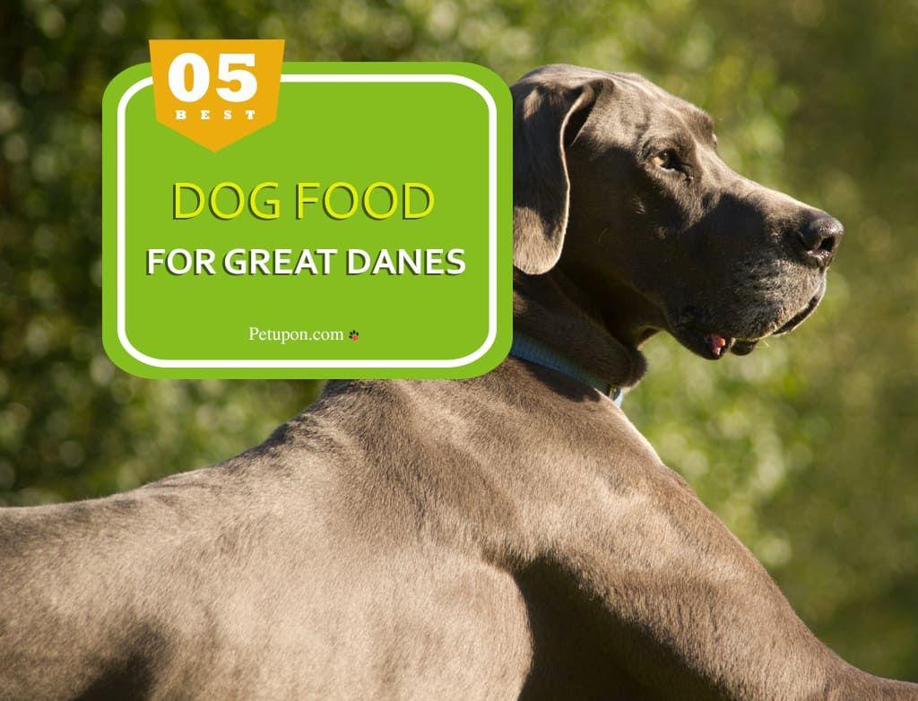 Best Dog Food For Great Danes Best Dog Food Dog Food Recipes