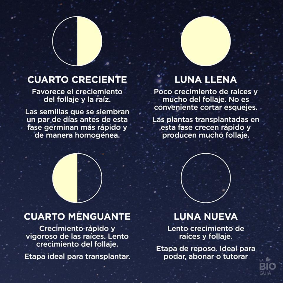 La fases de la luna hay que tenerlas en cuenta para for Que luna hay esta noche
