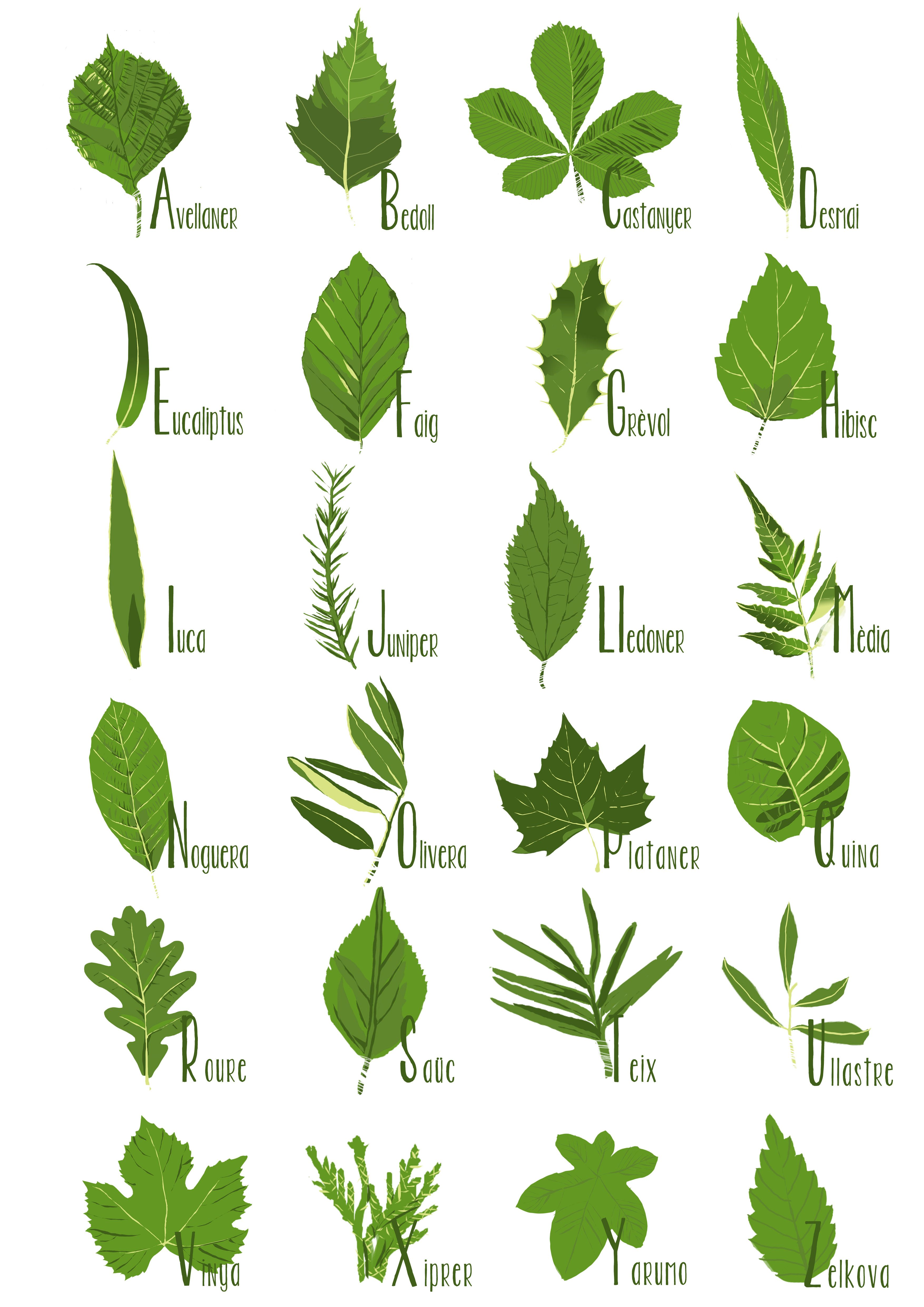 Abecedari de fulles tintasonora class treetree studytree identificationscience also how can leaves identify  tree an amazing guide to leaf rh pinterest