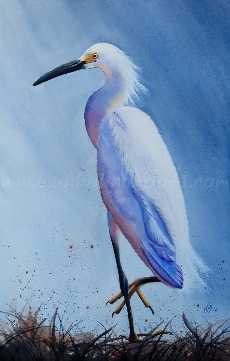 Snowy Egret Watercolor Snowy Watercolor Art Inspiration