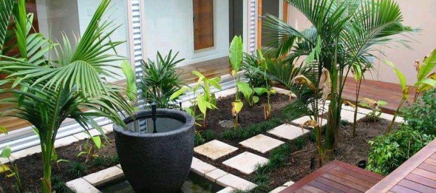 Ideas de jardines y patios interiores Kerala, Planters and Patios