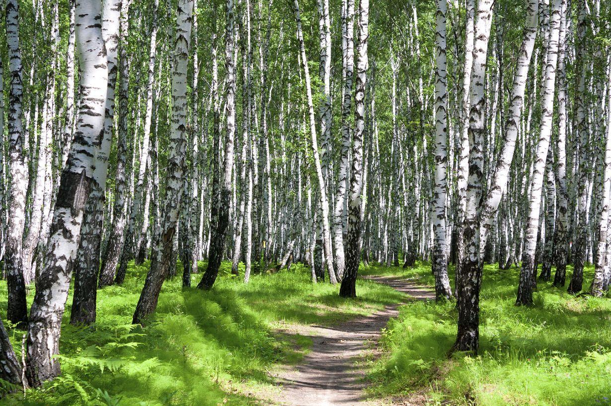 Tämän vuoksi metsä lievittää stressiä