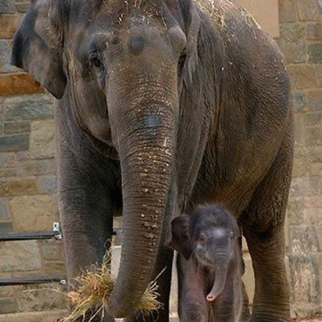 Tiny Baby Ele So Cute Elephant Animals Beautiful