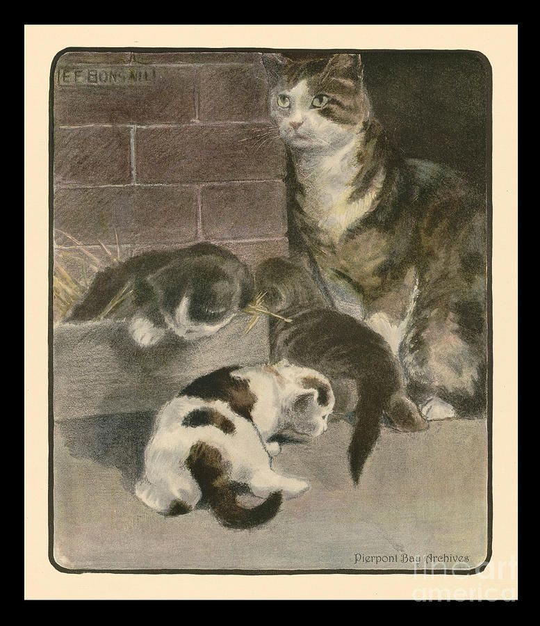 Momma Cat With Her Three Kittens 1903 By Elizabeth Bonsall And