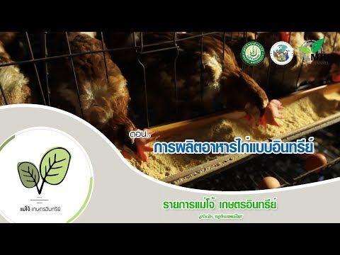 รายการแม โจ เกษตรอ นทร ย ตอน การผล ตอาหารไก แบบอ นทร ย Youtube ส ตว เล ยง