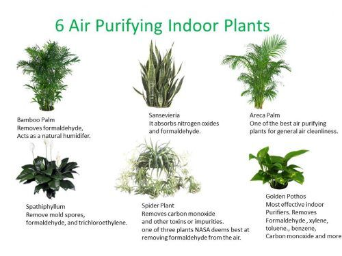 Indoor Plants With Names Air Cleaning