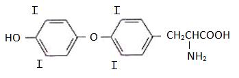 A tiroxina (também conhecida como T4) é um aminoácido importante, que é sintetizado naturalmente pela .. http://bit.ly/1LmQsEM #aminoacido #tiroxina #bioquimica #quimica #veja #leia #engquimicasantossp #curta #compartilhe #amigos